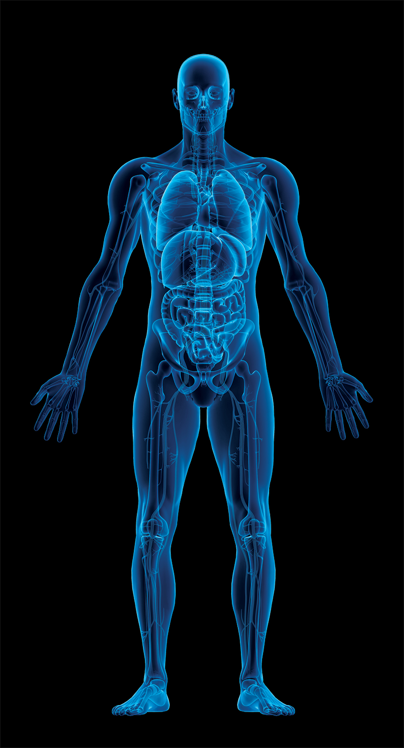 x-ray scan of human body